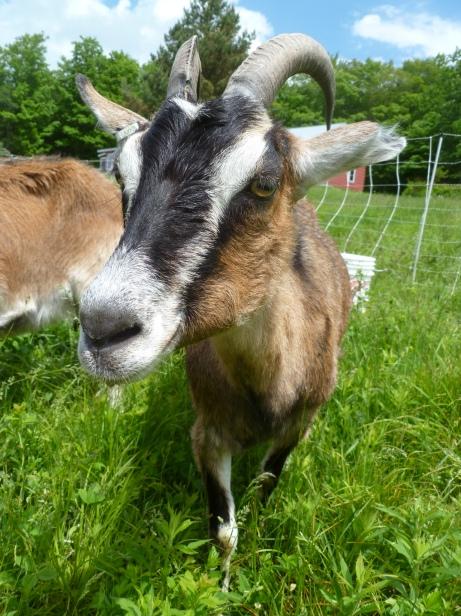 Photo Courtesy of Tangled Roots Farm in Shrewsbury