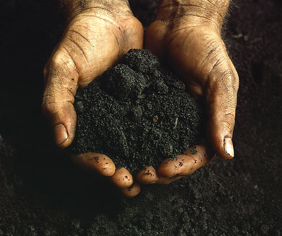 Hands Holding Soil --- Image by © L. Clarke/Corbis