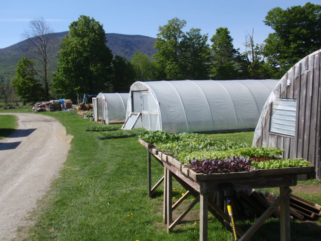 greenhouse-and-hoophouses